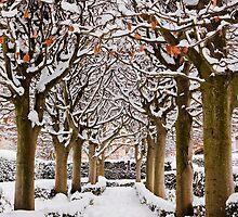 Snowy avenue, Oxford by Zoe Power