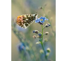 Small butterfly on blue flower Photographic Print