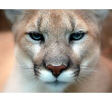 Cute Cougars Photographic Print
