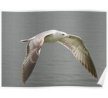 Seagull's Flight Poster
