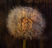 Dandelion by RosiLorz
