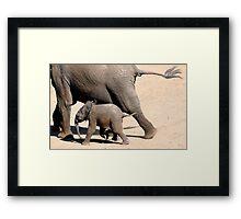 On the Run - African Elephant - Loxodonta africana Framed Print