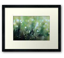 Moss Drops Framed Print