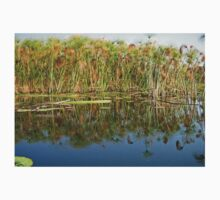 Papyrus  (Cyperus papyrus) Reflections in Okavango T-Shirt