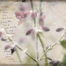 Russian Sage by JulieLegg