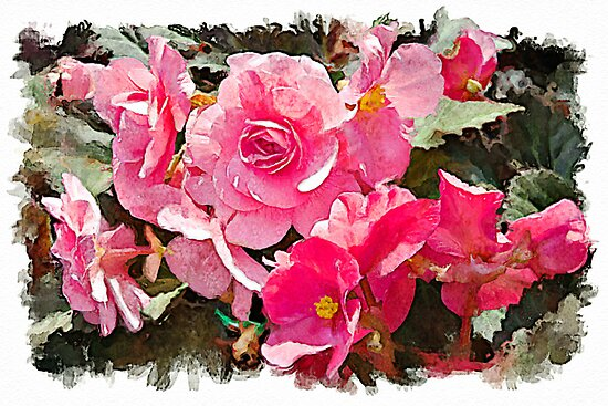 Pink Begonias - watercolour by PhotosByHealy