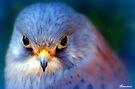 Little Boy Blue.... by naturelover