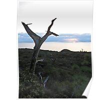 torrey sunset 2 Poster