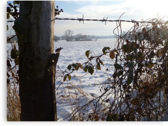 Snowy Field by Vicki Spindler (VHS Photography)