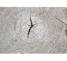 Top view of an old gray texture of a tree trunk Photographic Print