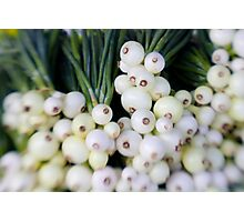 Pearl Onions Photographic Print