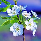 Spring in Mississippi by Thomas Eggert