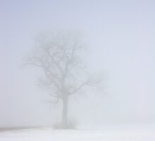 Tree in Fog and Snow by Chris Pultz