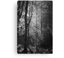 Mossy Trees Moulton Falls Canvas Print