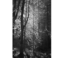 Mossy Trees Moulton Falls Photographic Print