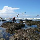 Collecting Cunjevoi, Corindi Beach, NSW by aussiebushstick