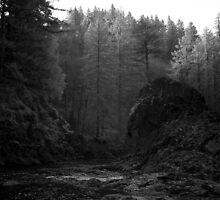 The Dark Creek below moulton falls by Isaac Daily