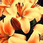 Bouquet of stargazer lilies by Shienna
