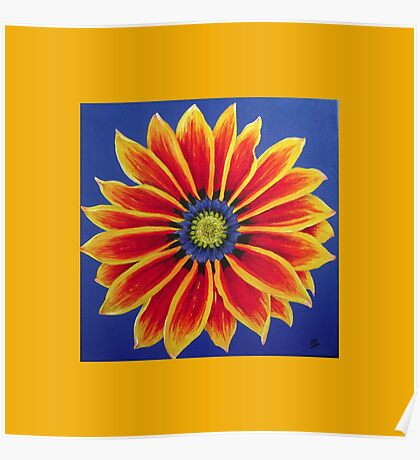 Gazania on Yellow  by Heather Holland Poster
