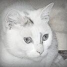 Pixie by scenebyawoman