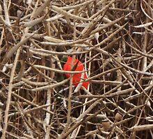 Poppy in the fields of Flanders by Kiriel