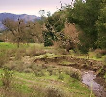 Stream in Santa Ynez by Renee D. Miranda