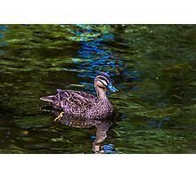 Duck Paddle Photographic Print