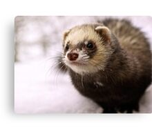 winter weasel! Canvas Print