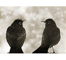 Timeless Robins Photographic Print
