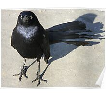 Resentful Grackle Poster