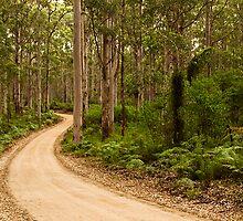 Boranup Forest by Austin Dean