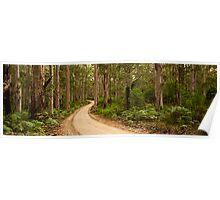 Boranup Forest Poster