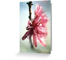 Peach Blossom Greeting Card
