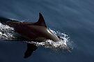 Dolphin Magic #1 by Odille Esmonde-Morgan