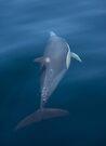 Dolphin Magic #2 by Odille Esmonde-Morgan
