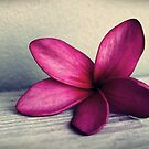 The Sugar Plum Fairy Flower by CarlyMarie