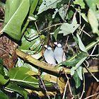 Tropical Birds by Joanna-Marie