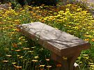 Come Sit Among the Daisies by Lucinda Walter