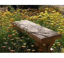 Come Sit Among the Daisies Photographic Print