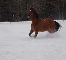"My wife's horse Sunny running in 12"" of fresh snow. by JeffreyKoss"