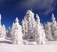 Winter Wonderland by Steve Hunter
