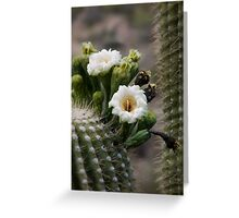 Magnificant Bloom of the Saguaro  Greeting Card