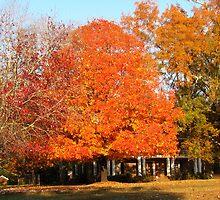 Orange Anyone: Lina's Tree Soul by Rusty Gentry