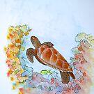 Hervey Bay Turtle by robert murray
