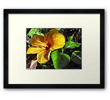 Born Tropical  Framed Print
