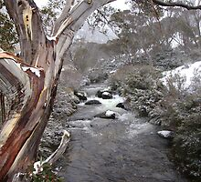 Snow Gum Fun by croftybt