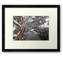 Snow Gum Fun Framed Print