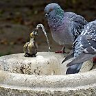 How does that strange bird that? by Arie Koene