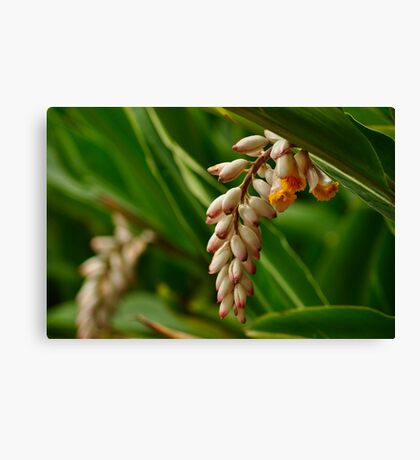 Flower From a Ginger Plant Canvas Print