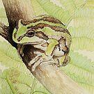 Alpine Tree Frog (Litoria verreauxii alpina) by Laura Grogan